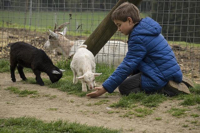 Zoológico, un entretenido panorama para vacaciones de invierno.