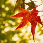 Hoja de arbol en otoño